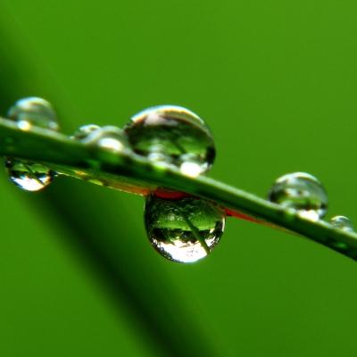 Raindrops-on-a-leaf